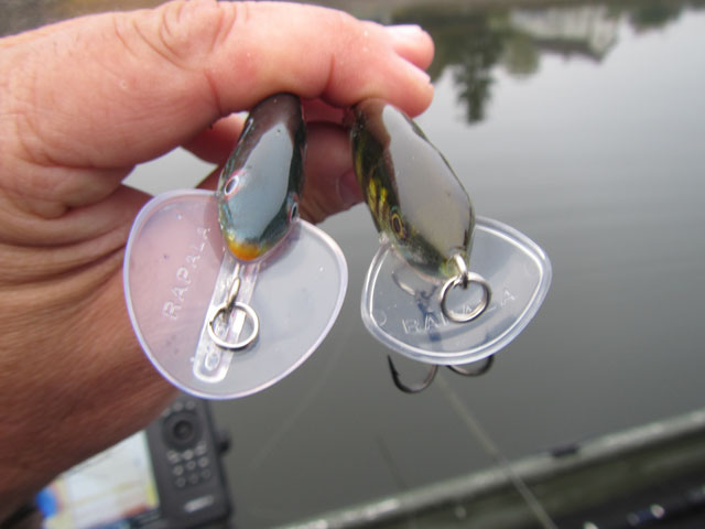 scatter-rap-shad-rapala-2