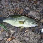 Les pêcheurs de l'impossible, spécial black bass